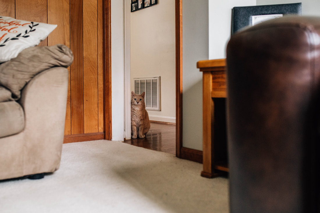 image of tan cat sitting quietly in the doorway